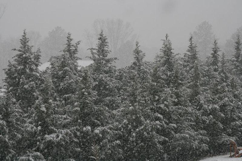 Snow again 015rs