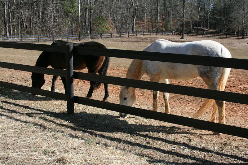 Horses 050rs