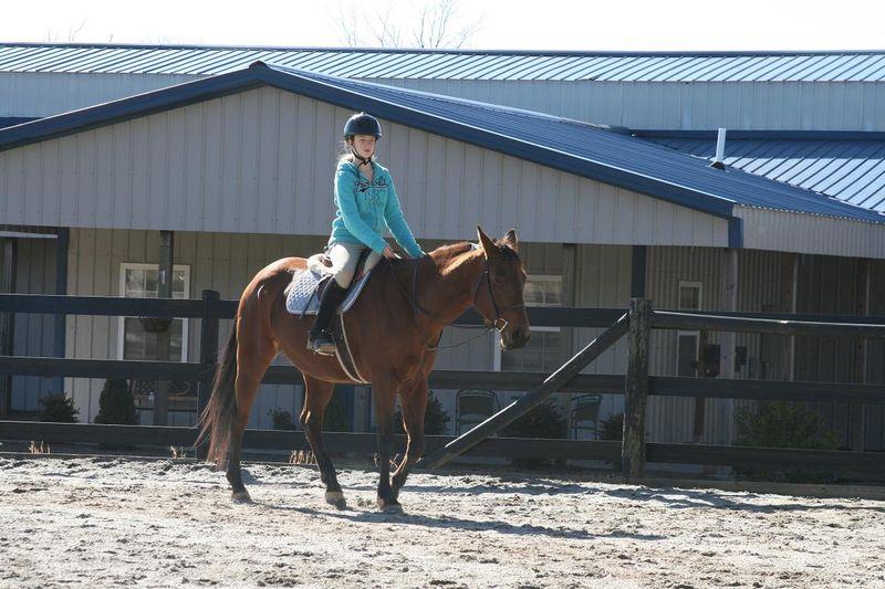 Horses 058rs