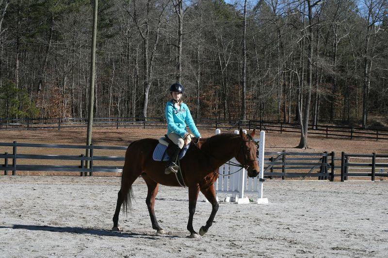 Horses 015rs
