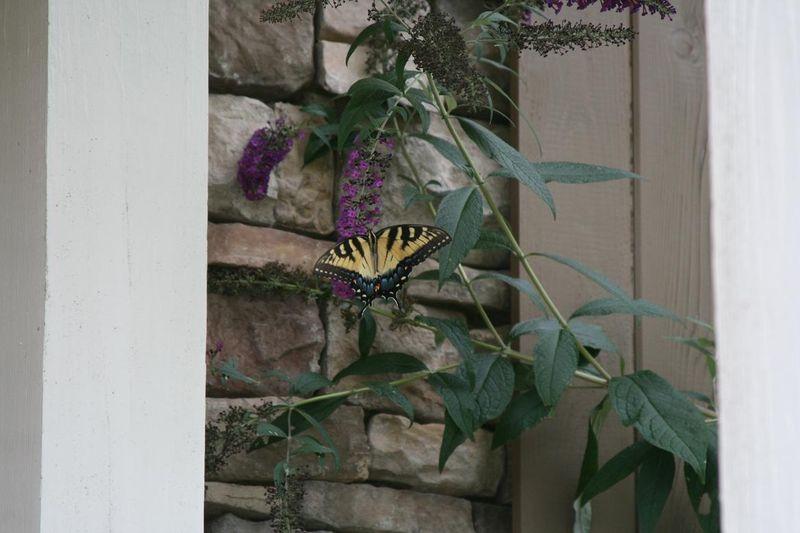 Butterflies 010.jpgrs