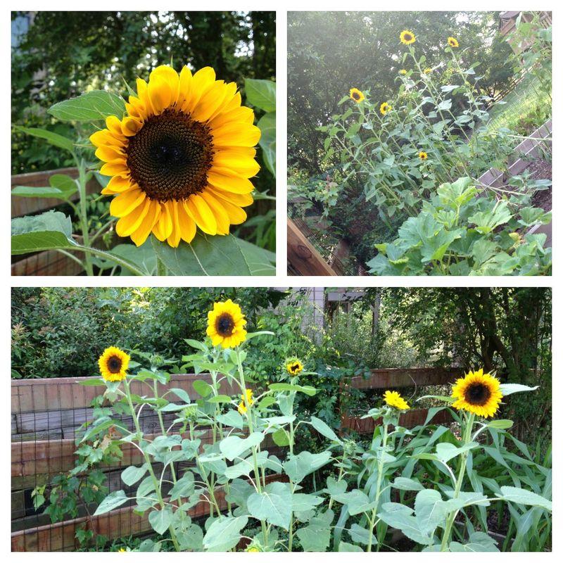 Garden 3 Collage